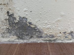 Prevent damp on your walls